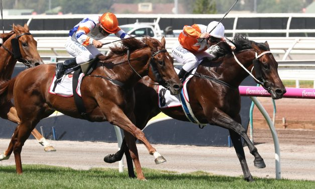 Sircconi to Improve Off McKenzie Stakes Run
