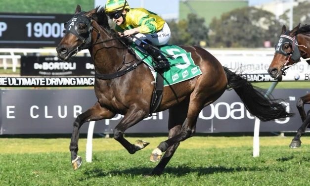 Geegees Goldengirl draws perfectly in 2018 Hobart Cup