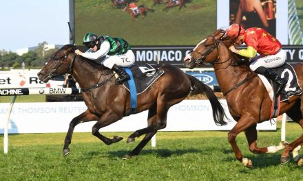 Gold Standard tested for a Golden Rose spot in Stan Fox Stakes