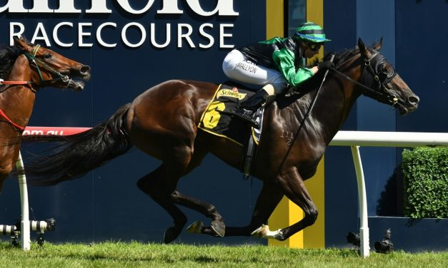 Super Cash to Resume in Moir Stakes
