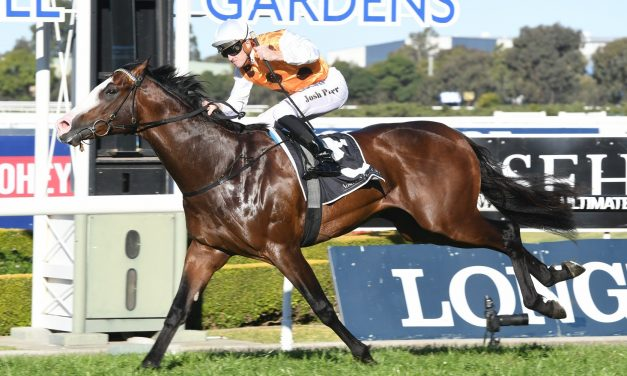 Menari eases slightly in Golden Rose betting