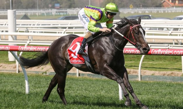 Leather'N'Lace draws wide in capacity Edward Manifold Stakes field