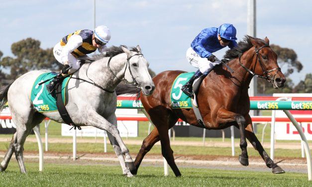 Grey Lion ready to roar in 2017 Ballarat Cup
