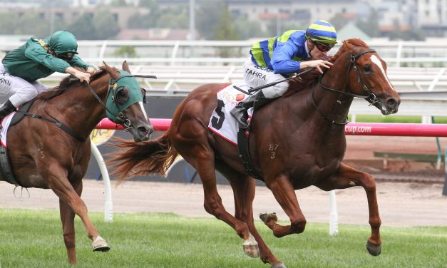 100-1 shot Seaburge to line up against Winx in 2017 Cox Plate