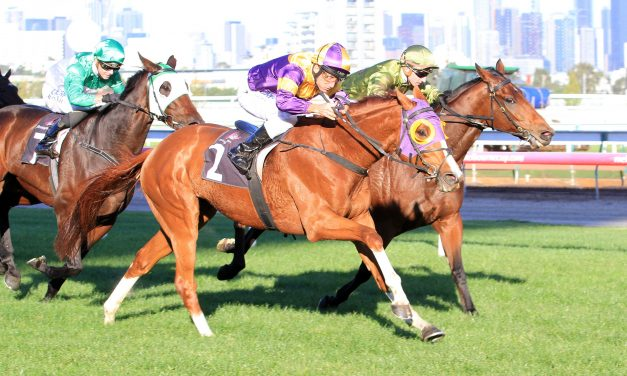 Swacadelic in great shape for 2017 Sandown Cup