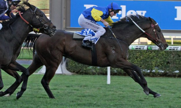 New jockey needed for Trap For Fools in 2018 Perth Cup
