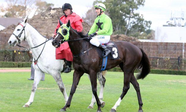 Tassie Tshahitsi Raids Standish Handicap Field