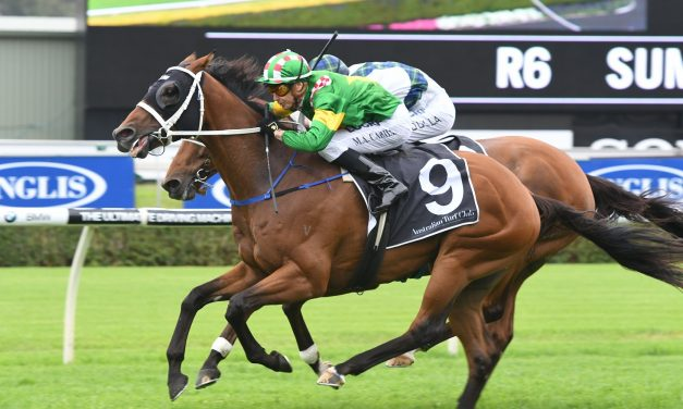 Montauk and Red Excitement to clash again in Gosford Gold Cup