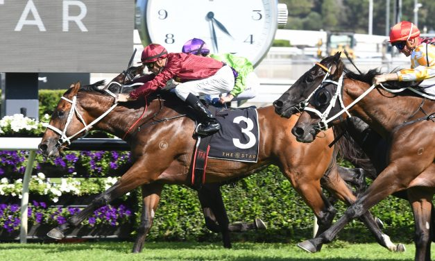 Endless Drama to perform for the Kiwis in 2019 Winterbottom Stakes