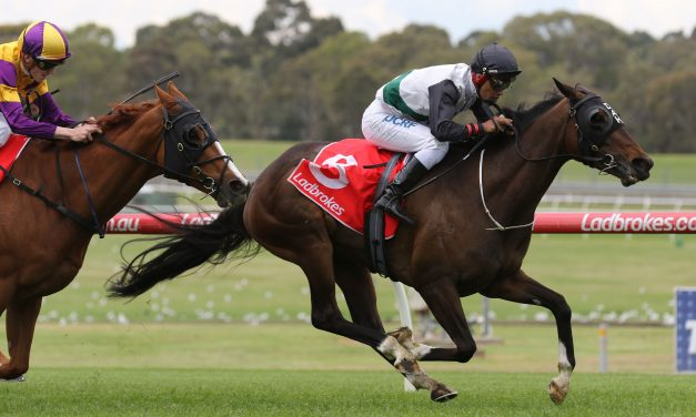 2018 Adelaide Cup Field: Favourite Fanatic Draws 3