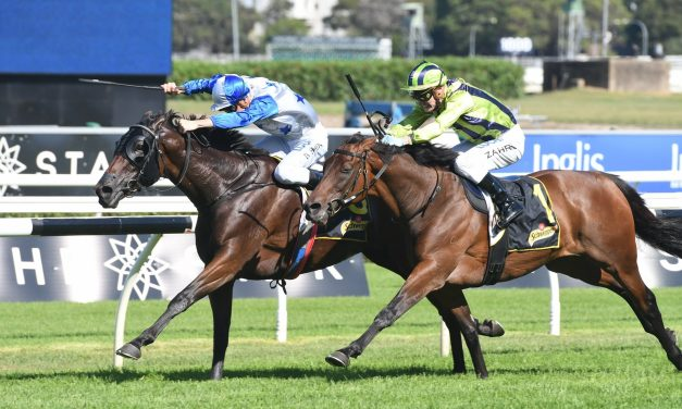 Sydney Cup next for Chairman's Quality winner Sir Charles Road