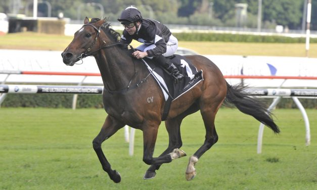 Tradesman draws midfield in 2018 Ipswich Cup field