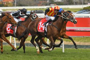 Showtime returned to winning form in the P.B. Lawrence Stakes. Photo by: Ultimate Racing Photos