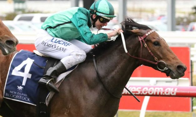 Humidor takes first steps back for third Cox Plate campaign
