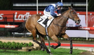 Viddora wraps up Winterbottom Stakes defence with slick gallop