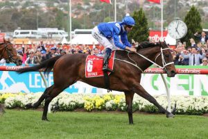 Winx Horse. (Photo: Ultimate Racing Photos) - HorseRacing.com.au