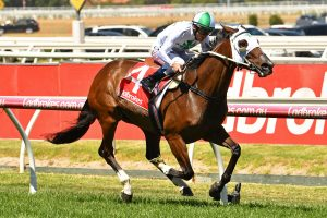 Jamaican Rain, above, is one of the favourites for the Bright Shadow at Eagle Farm. Photo by Ultimate Racing Photos.