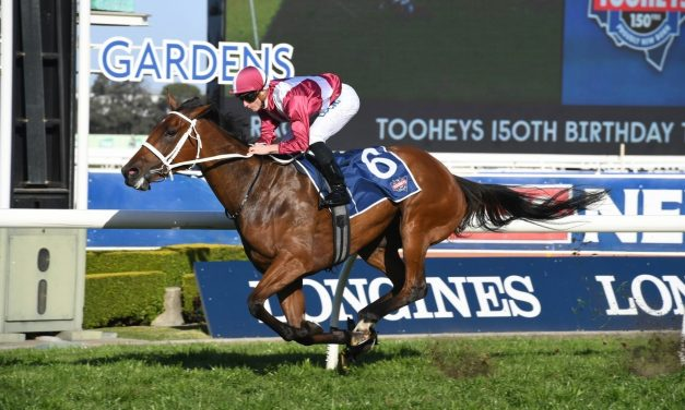 Neds Stakes winner Arcadia Queen set to rule in Cox Plate