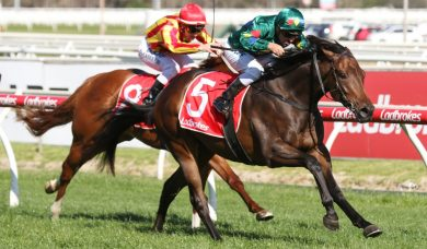 Final Magic Millions Guineas Lead-Up for Alligator Blood