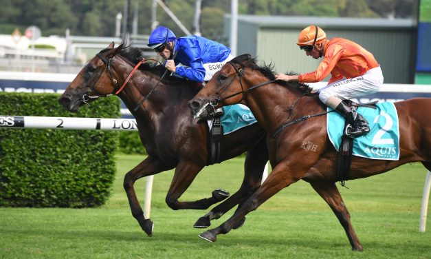 Alizee firms in Chipping Norton betting after Apollo Stakes win