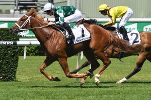Hungry Hart Horse Form (Photo: Steve Hart) | HorseRacing.com.au