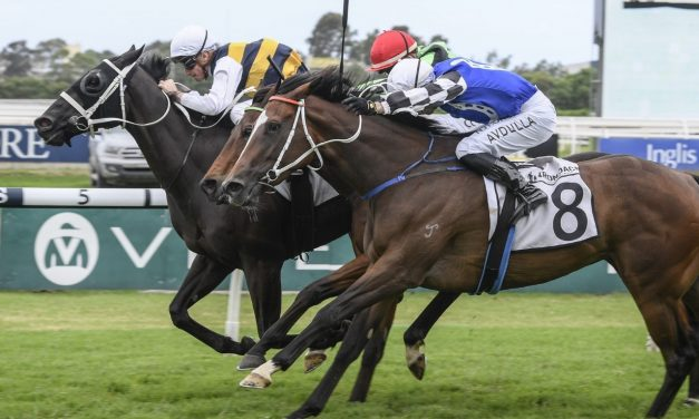 Night's Watch still at long odds for Queen Elizabeth Stakes after Neville Sellwood Stakes win