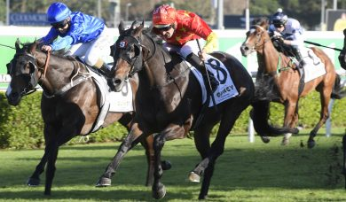 Stradbroke Handicap Could Be Next Assignment for 2020 Gold Coast Guineas Winner Hightail