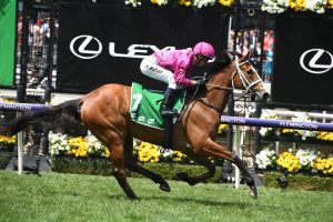 Sure Knee (Photo: Steve Hart) - HorseRacing.com.au
