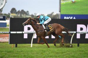 Anders Horse Form (Photo: Steve Hart) | Horseracing.com.au
