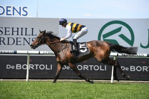 Attorney, above, wins the Colin Stephen Quality at Rosehill. Photo by Steve Hart.