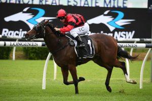 Converge Horse Form (Photo: Steve Hart) | HorseRacing.com.au