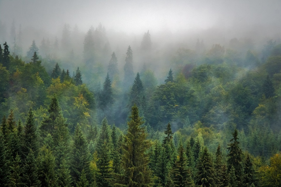 Forests of Transylvania