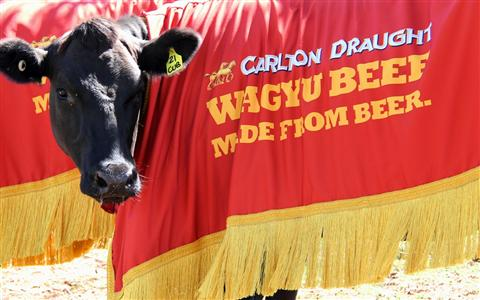 Carlton-Draught-Wagyu-Beef-125-small_New1