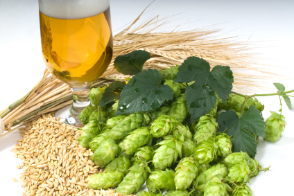 hops_grain_and_beer
