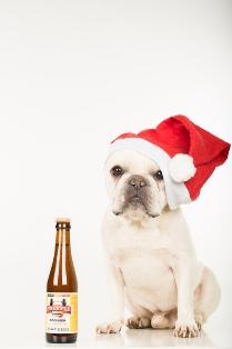 dog_beer_web