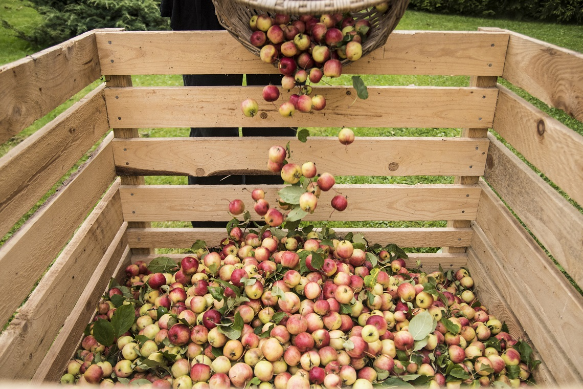 Australian Cider Awards 2019