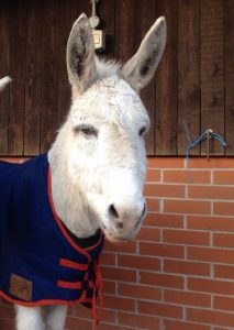 Meet new friends at the Donkey Sanctuary.