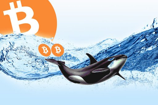 Bitcoin Whale Siphons off $415M worth of BTC For Only 5 USD