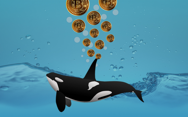 Bitcoin Whales Are Rising As Bitcoin Halving Approaches