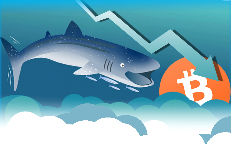 Bitcoin Whales Accumulates More Tokens as Price Goes Down