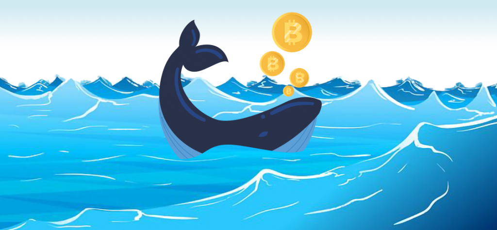 Bitcoin Whales Shifts Million Dollar Worth Cryptocurrencies After Experiencing Drop-In Price