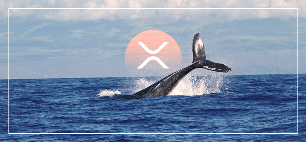 XRP Whales on a Buying Spree