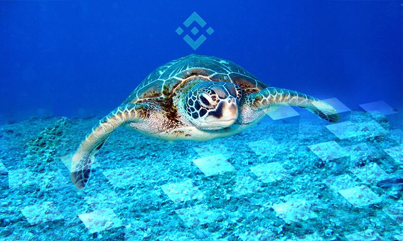 Binance Smart Chain's TurtleDEX Exit Scams, Stealing $2.5 Million in BNB