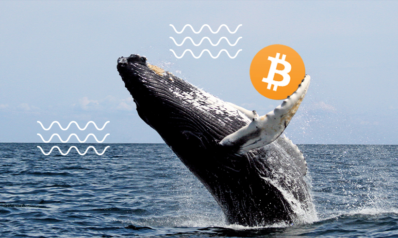 Bitcoin Whale Moves Massive $500 Million in BTC for a $53 Fee