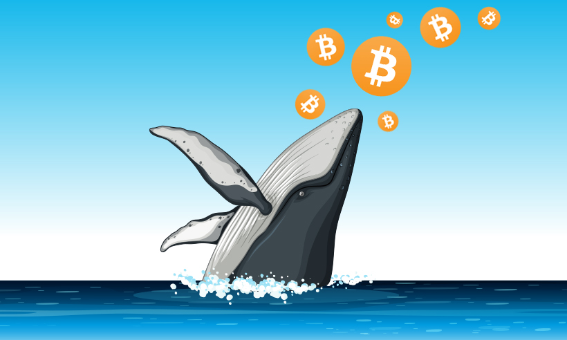 Crypto Whale Adds 262 More Bitcoins to Its Treasury