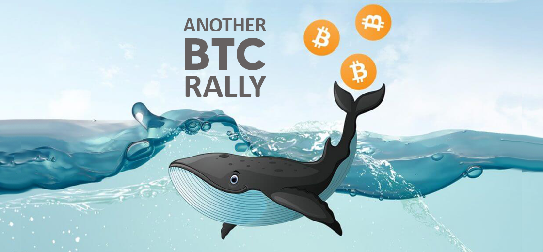Surge in Bitcoin Whale Holdings Indicates Another BTC Rally