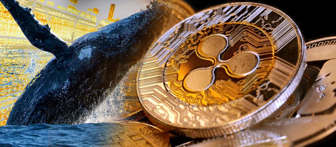 XRP Whale Shifts 15.6M Coins to an Unknown Wallet