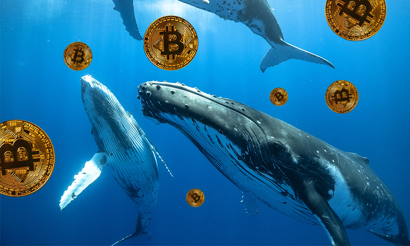 Whales Amass 90,000 BTC in 25 Days, Own 50% Share of Total Circulation