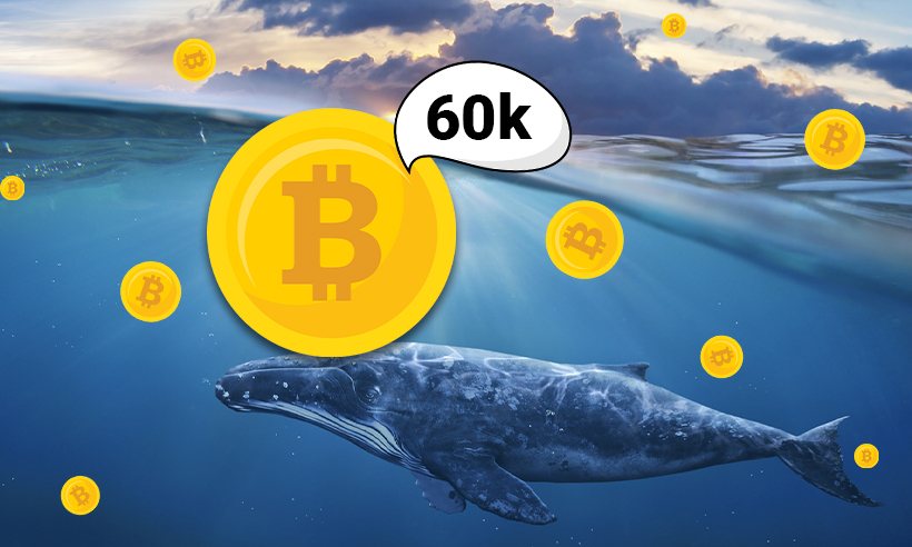 Bitcoin Soars to $35,000 as Whales Accumulate 60K BTC