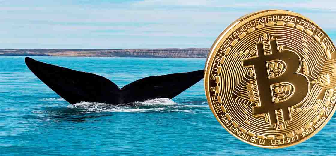 Bitcoin Whales Accumulating BTC, Added 60K Bitcoin in a Day
